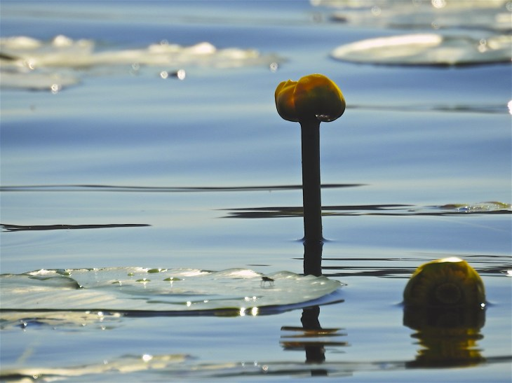 Ulpukka Jyväsjärvellä