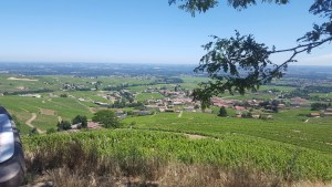 Vue sur les vignes du beaujolais