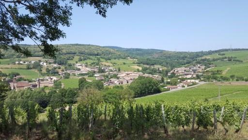 Paysage du vignoble de Pouilly Fuissé