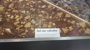 Sol calcaire du Beaujolais