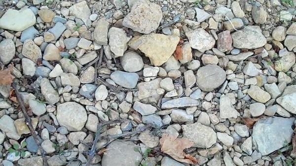 Sol de vignes couvert de cailloutis