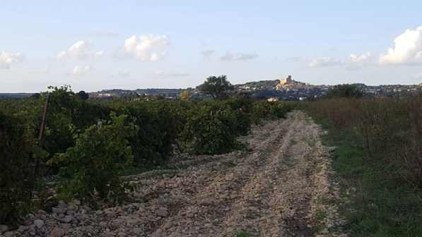 Châteauneuf-du-Pape la ville vue des vignes