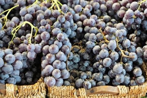 Du raisin rouge pour du vin rouge