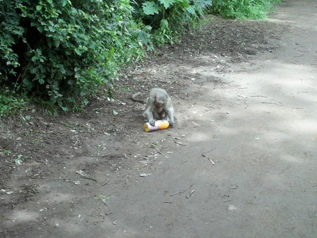 Him savoring the mango pulp