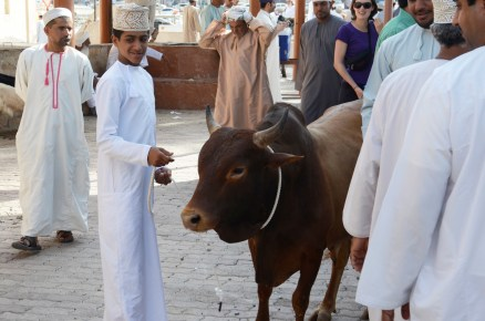 Nizwa, Sultanate of Oman 2013 - for Tourist Austria International
