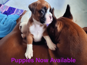 Puppies Now Available