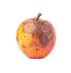 Rotten Apple VinciWorks Blog
