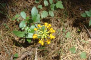 Pine Barrens & Native Orchids August 2015-18