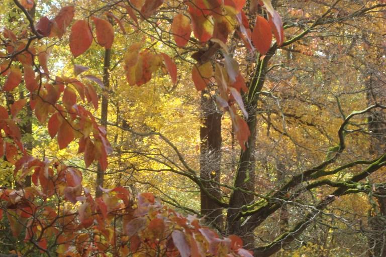 Autumn 2015-19