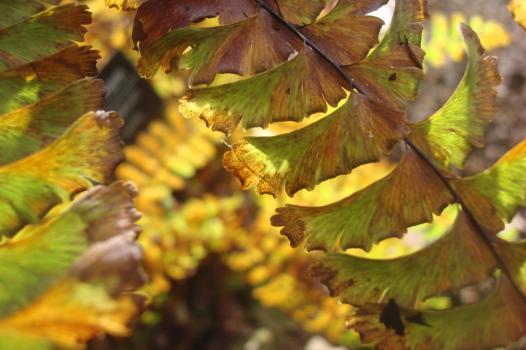 Autumn colour blocks October 2015-11