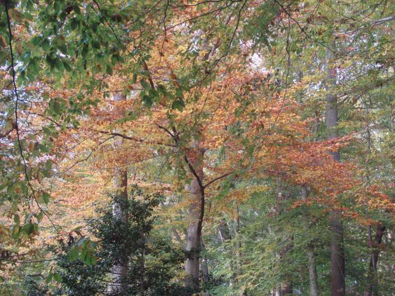 Winterthur Autumn 2013-20
