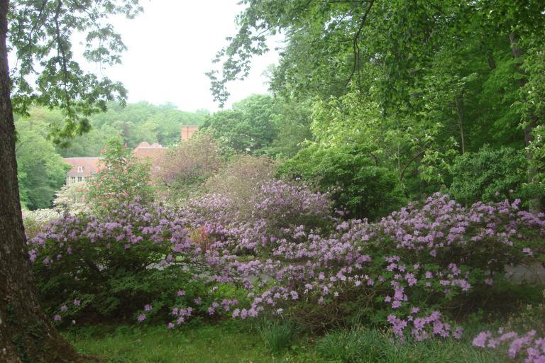 Azalea woodlands Winterthur May 2015-20