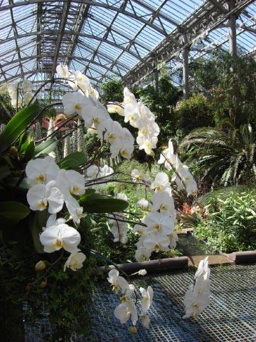 longwood-gardens-conservatory-9