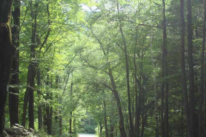whispell-road-west-shokan-summer-2014-12
