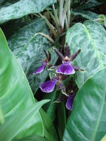 longwood-orchids-47