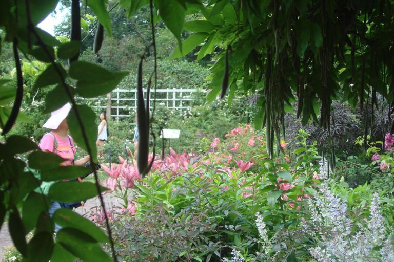 Roses Brooklyn Botanical Garden June 2015-129