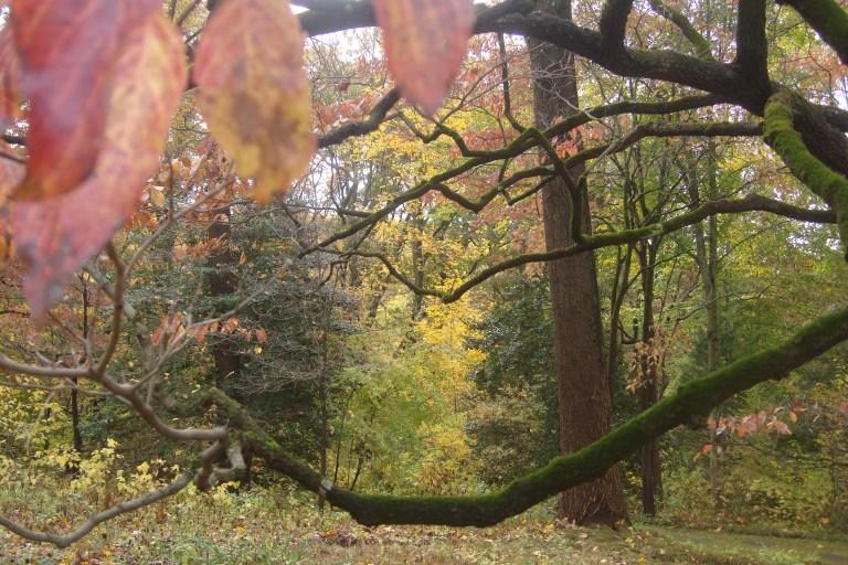 Autumn 2015-17