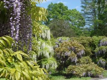 Wisteria Arbor, Longwood Gardens, 2011-03