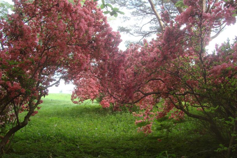 Azalea woodlands Winterthur May 2015-12