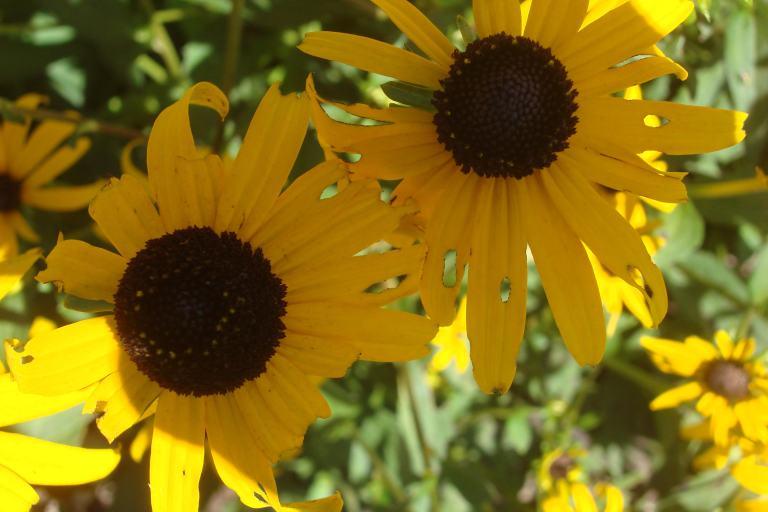 Perennials 2015-06