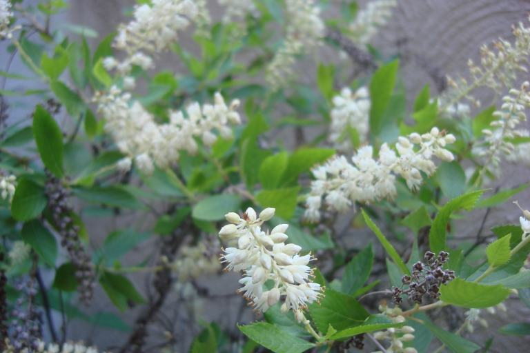 Pine Barrens & Native Orchids August 2015-25