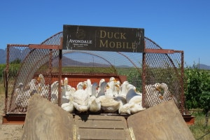 Duck Mobile at Avondale