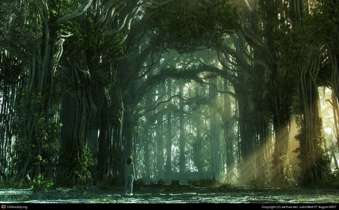 The sun light of Forest 1