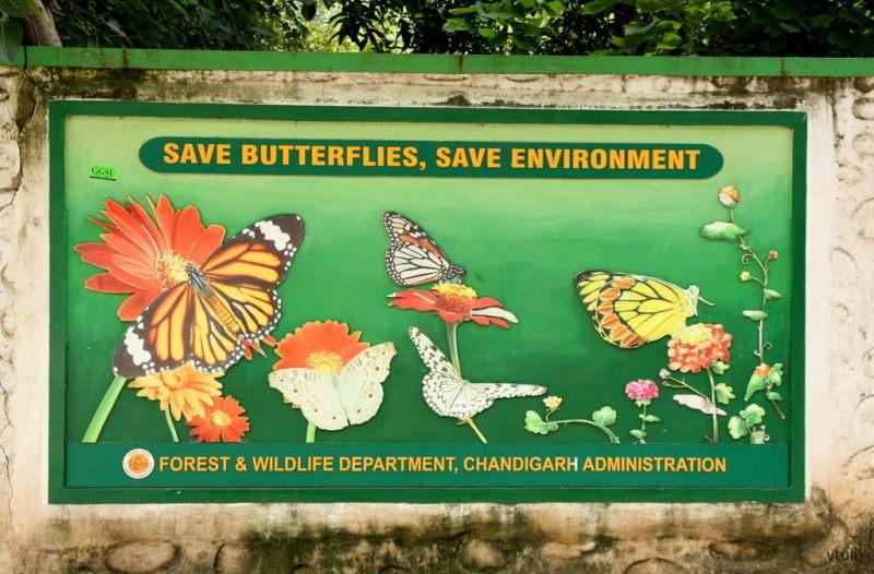 Save Butterflies - Butterfly Park Chandigarh
