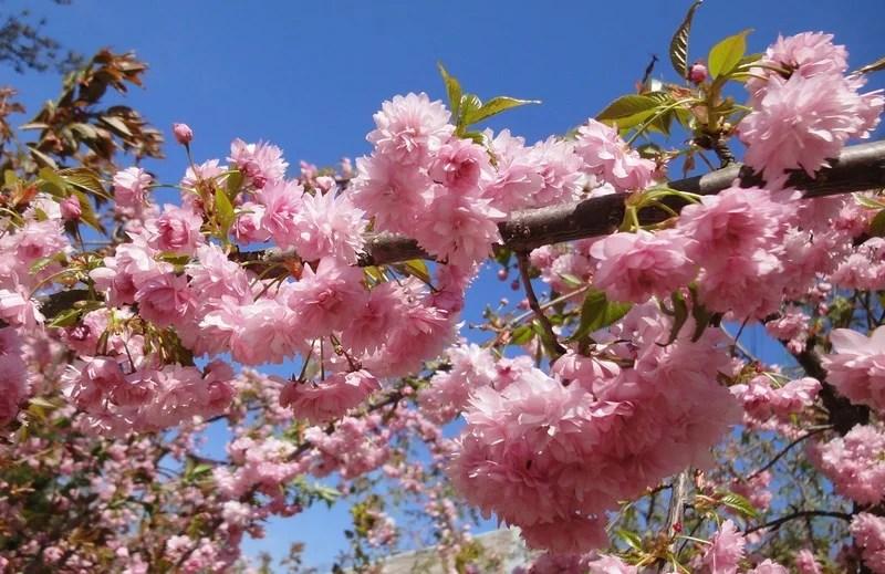 Photos-of-Sakura-vinegret (11)