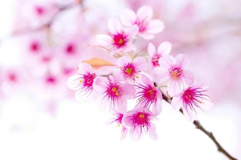 Photos-of-Sakura-vinegret (14)