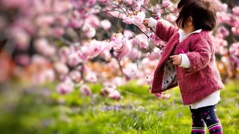 Photos-of-Sakura-vinegret (17)