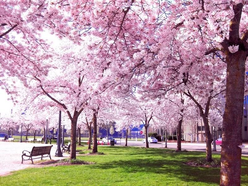 Photos-of-Sakura-vinegret (19)