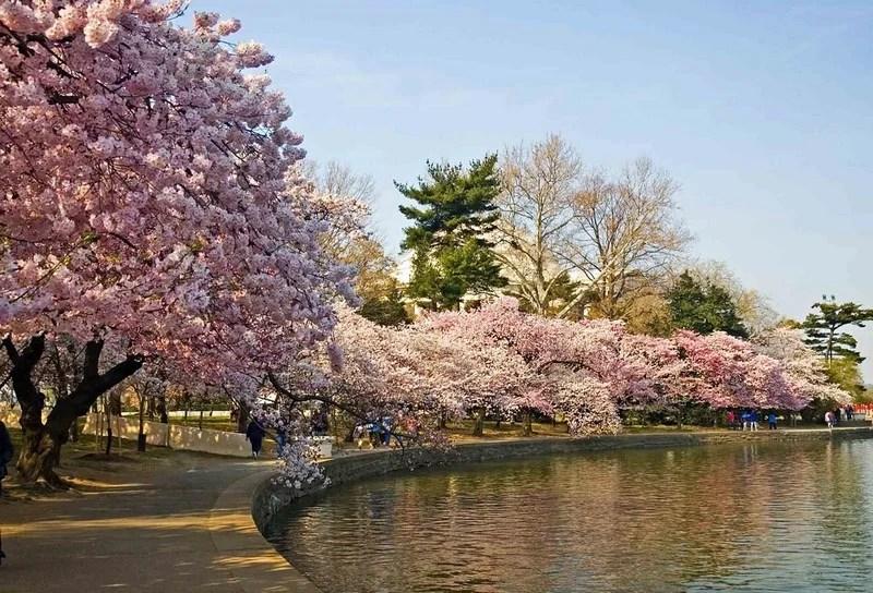Photos-of-Sakura-vinegret (2)