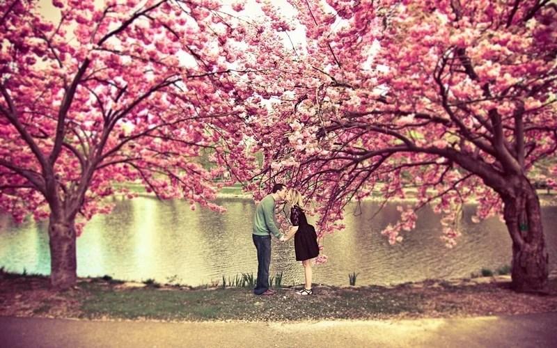 Photos-of-Sakura-vinegret (21)