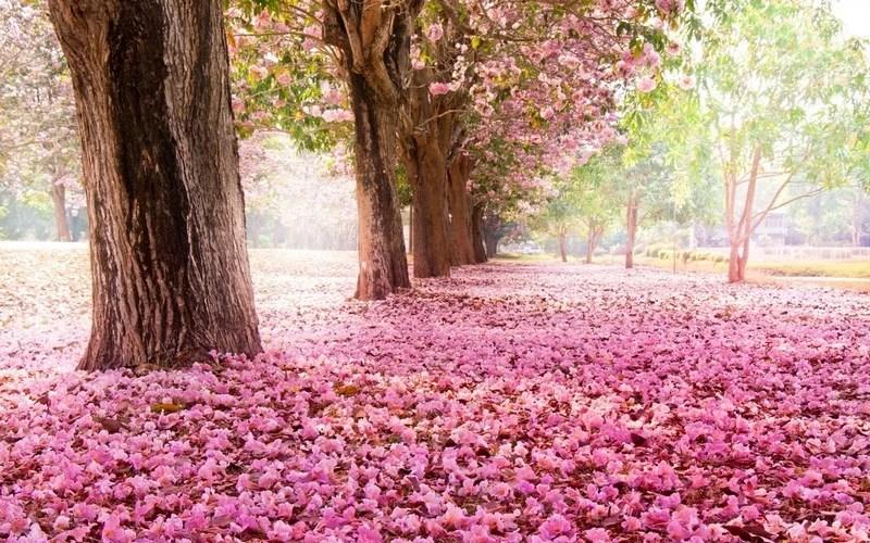 Photos-of-Sakura-vinegret (23)