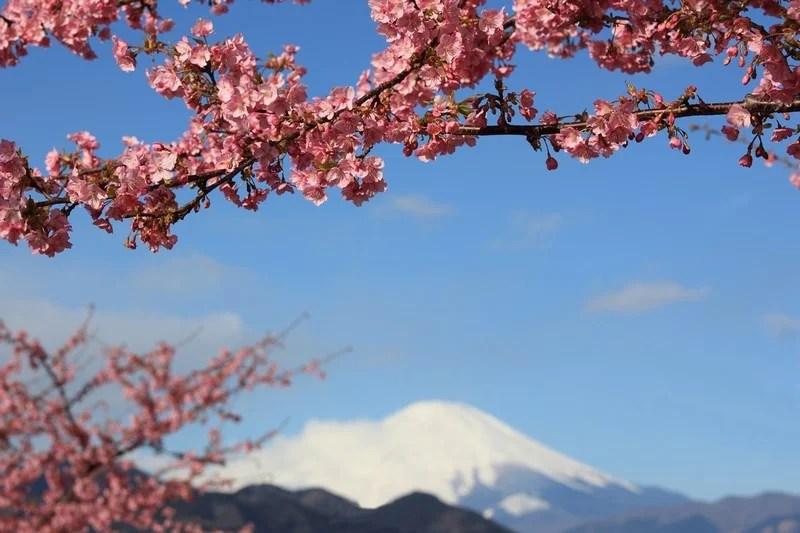Photos-of-Sakura-vinegret (25)