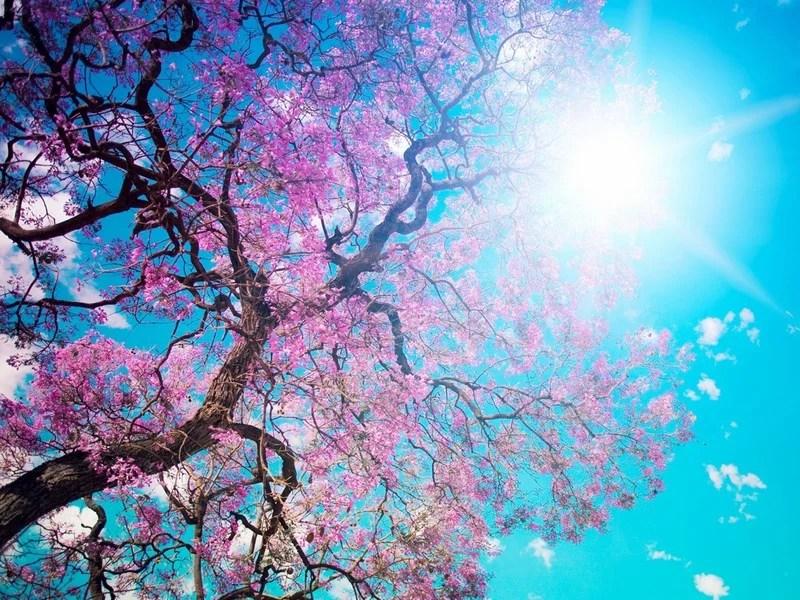 Photos-of-Sakura-vinegret (26)