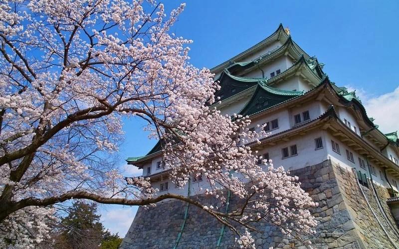 Photos-of-Sakura-vinegret (5)