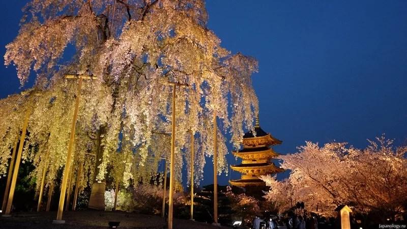 Photos-of-Sakura-vinegret (6)