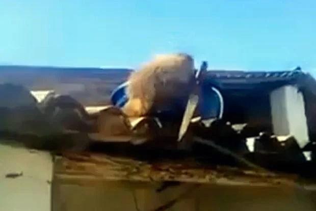 Видео: Пьяная обезьяна с огромным ножом угрожала посетителям бара.