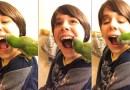 Видео: Попугай-стоматолог.