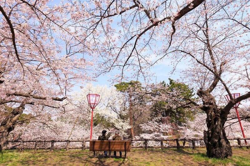 National-Geographic-cvetenie-sakuri-vinegret (11)