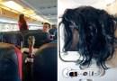 Фотографии самых раздражающих пассажиров самолетов.