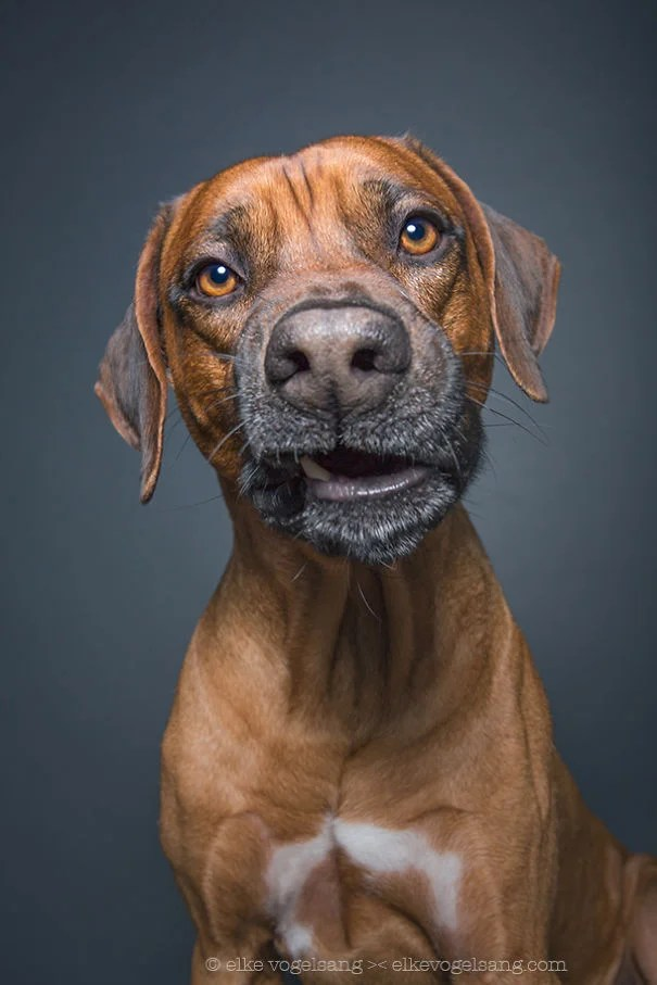 dogs-questioning-the-photographers-sanity_vinegret (7)