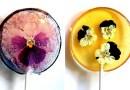 Кондитер создает уникальные леденцы с настоящими цветами внутри.