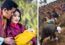 Жители Бутана отметили день рождения принца посадкой 108 000 деревьев.