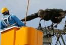 Взрослый шимпанзе сбежал из японского зоопарка и устроил настоящий переполох! (+Видео)