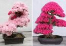20+ удивительных фотографий деревьев бонсай.