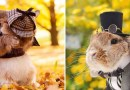 PuiPui — самый стильный кролик в мире.