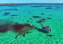 Видео: Дрон заснял, как 70 акул разрывают мертвого кита.